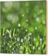 Fresh Spring Morning Dew Wood Print