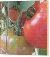 Fresh Tomatoes Ahead Wood Print