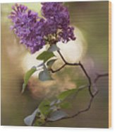 Fresh Violet Lilac Flowers Wood Print
