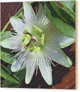 Fresh White Passion Flower  Wood Print