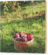 Freshly Picked Apples In The Orchard  Wood Print
