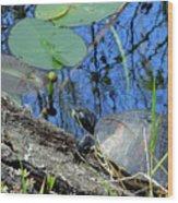 Freshwater Turtle Sunning Wood Print