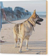 German Shepherd With Man On The Beach Wood Print