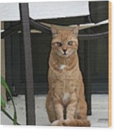 Friendly Cat In Key Largo Wood Print