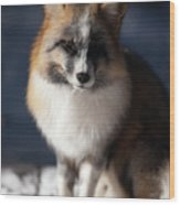 Friendly Fox Wood Print