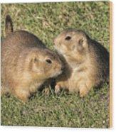Friendly Prairie Dogs Wood Print