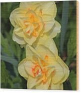 Friendship Daffodils Wood Print