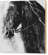 Friesian Horse Beauty Wood Print