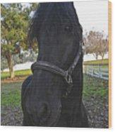 Friesian Horse Head Wood Print