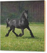 Friesian Power Wood Print
