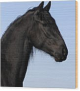 Friesian Stallion Wood Print
