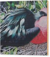 Frigate Bird  Wood Print