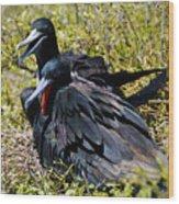Frigatebirds In Love Wood Print