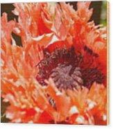 Frilly Poppy Wood Print