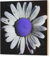 Fringe - Blue Flower Wood Print