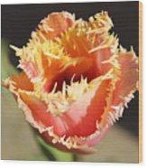 Fringed Tulip Wood Print