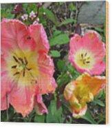 Fringed Tulips Wood Print