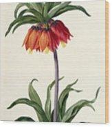 Fritillaria Imperialis Wood Print