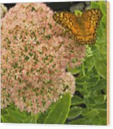 Fritillary On Flower Wood Print