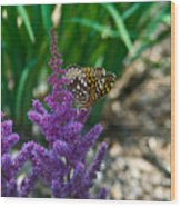 Fritllary Butterfly On Astilbe Wood Print