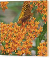 Frittalary Milkweed And Nectar Wood Print
