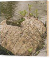Frog 1 Wood Print
