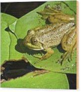 Frog 2 Wood Print