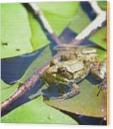 Frog 3 Wood Print