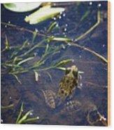 Frog 5 Wood Print
