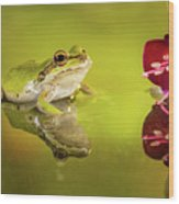 Frog And Fuchsia With Reflections Wood Print