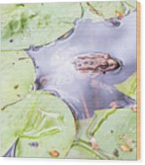 Frog And Lily Pads Wood Print