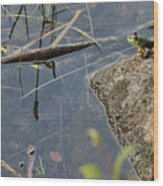Frog At Pond Wood Print