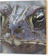 Frog Eyed Wood Print