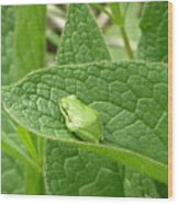 Frog In Comfrey Wood Print