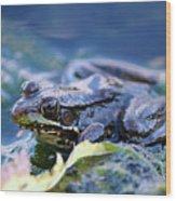 Frog In Water Wood Print