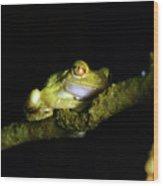 Frog Night Feeding Wood Print