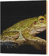 Cuban Tree Frog Wood Print