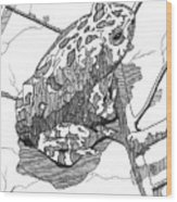 Oak Toad On A Leaf Wood Print