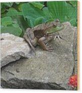Frog On A Rock Wood Print