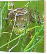 Frog Playing Hide N Seek Wood Print