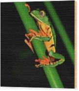Frog Pole Vault  Wood Print