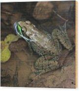 Frog Pond Wood Print
