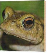 Frog Posing Wood Print