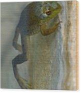 Frog Swim Wood Print