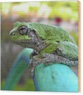 Frog Watering Plants Wood Print
