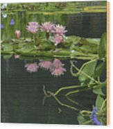 Water Lily Reflections Wood Print