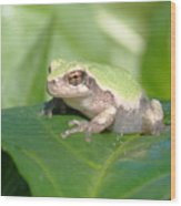 Froggie In The Pepper Patch Wood Print