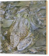 Frogs Eye View Wood Print