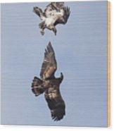 Frolicking Eagles Wood Print