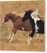 Frolicking Horses Wood Print
